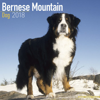 Bernese Mountain Dog Calendar 2018