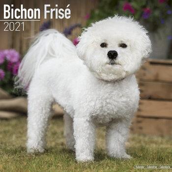 Bichon Frise Calendar 2021