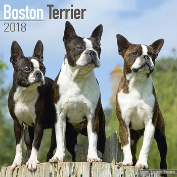 Boston Terrier Calendar 2018