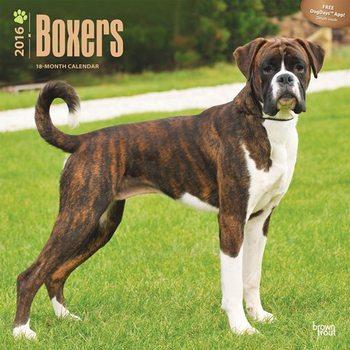 Boxers Calendar 2021