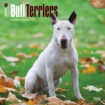 Bull Terriers Calendar 2021