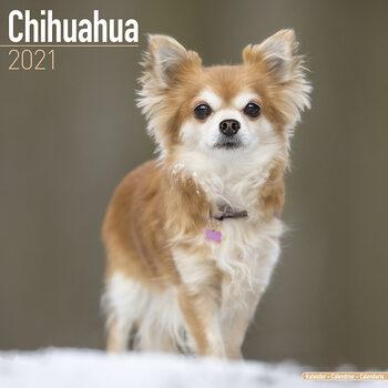 Chihuahua Calendar 2021
