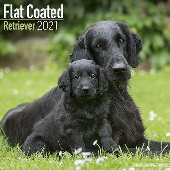 Flat Coated Retriever Calendar 2021