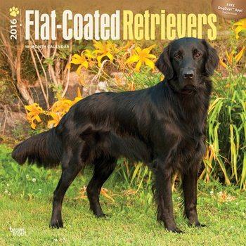Flat-Coated Retrievers Calendar 2021