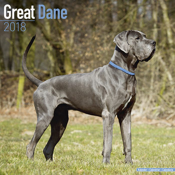 Great Dane Calendar 2018