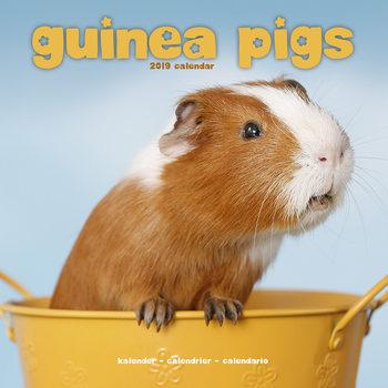 Guinea Pigs Calendar 2019