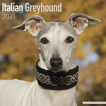 Italian Greyhound Calendar 2021