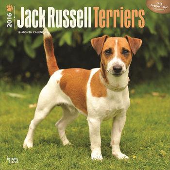 Jack Russell Terriers Calendar 2021