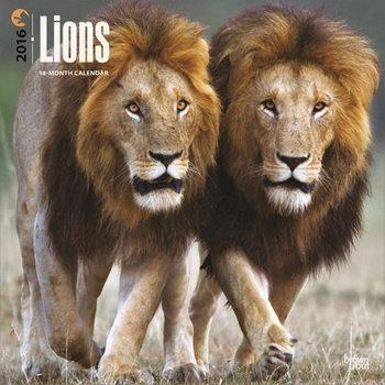 Lions Calendar 2021