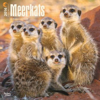 Meerkats Calendar 2021