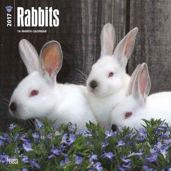 Rabbits Calendar 2017