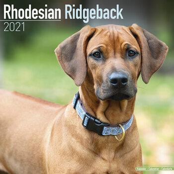 Rhodesian Ridgeback Calendar 2021