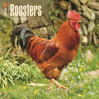 Roosters Calendar 2021