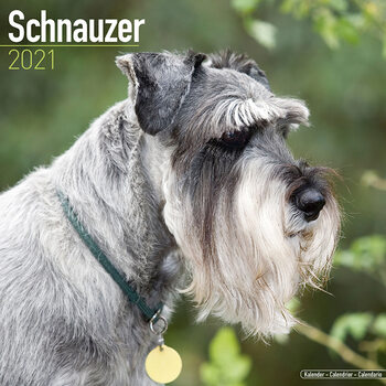Schnauzer Calendar 2021