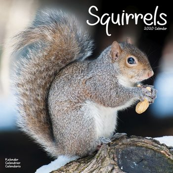 Squirrels Calendar 2020