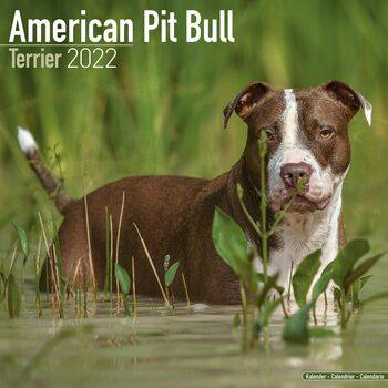 Calendario 2022 American Pit Bull Terrier