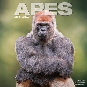 Calendario 2022 Apes