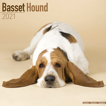 Calendario 2021 Basset Hound