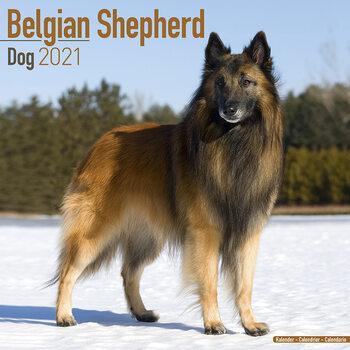 Calendario 2021 Belgian Shepherd Dog