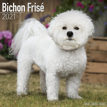 Calendario 2021 Bichon Frise