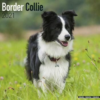 Calendario 2021 Border Collie