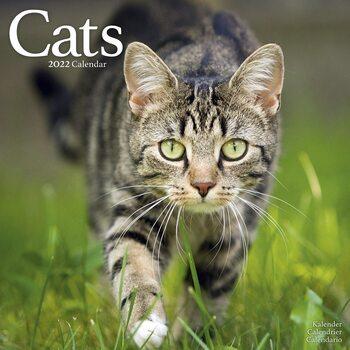 Calendario 2022 Cats