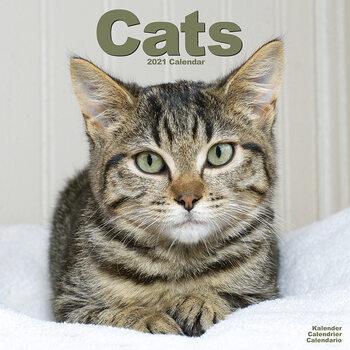 Calendario 2021 Cats