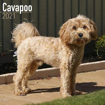 Calendario 2021 Cavapoo
