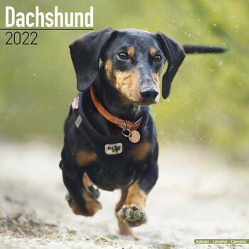 Calendario 2022 Dachshund