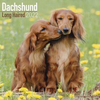 Calendario 2022 Dachsund