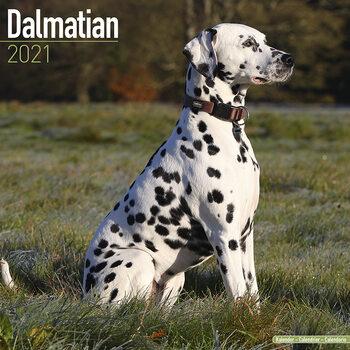 Calendario 2021 Dalmatian