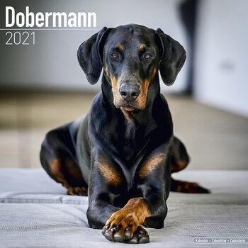 Calendario 2021 Dobermann