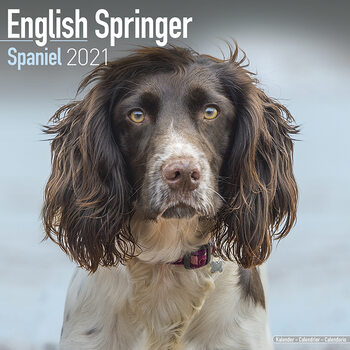 Calendario 2021 Eng Springer Spaniel