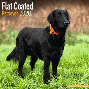 Calendario 2020  Flatcoated Retriever