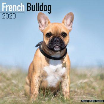 Calendario 2020  French Bulldog