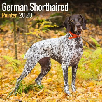 Calendario 2020  German ShortHair Pointer