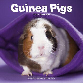 Calendario 2022 Guinea Pigs