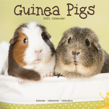 Calendario 2021 Guinea Pigs