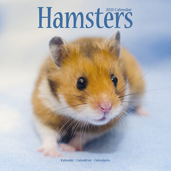 Calendario 2021 Hamsters