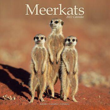 Calendario 2022 Meerkats