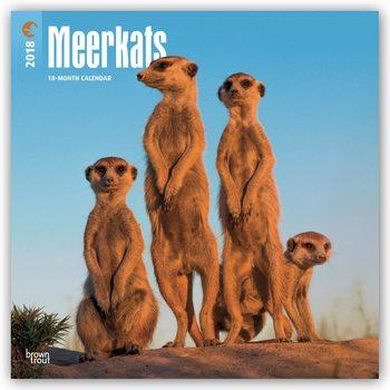 Calendario 2020 Meerkats