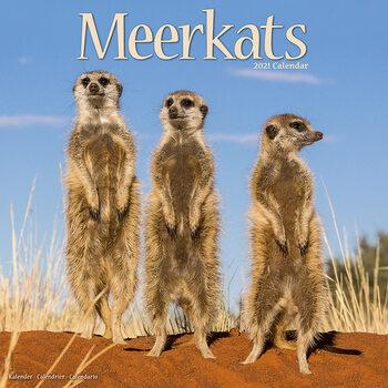Calendario 2021 Meerkats