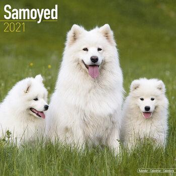 Calendario 2021 Samoyed