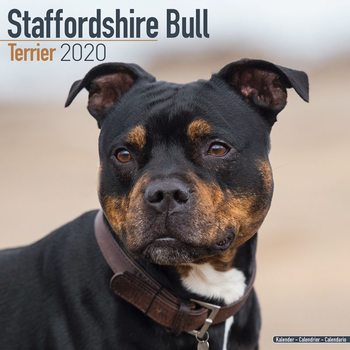 Calendario 2020  Staffordshire Bull Terrier