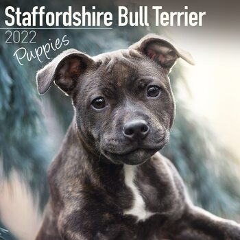 Calendario 2022 Staffordshire Bull Terrier Pups