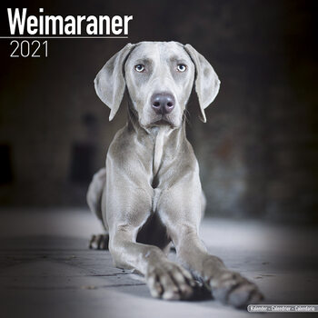 Calendario 2021 Weimaraner