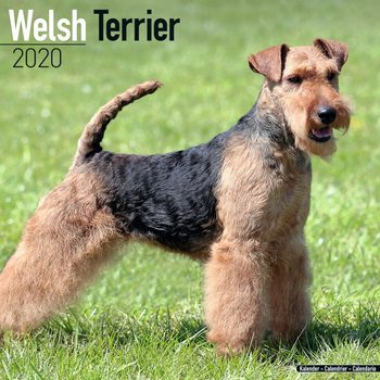 Calendario 2020  Welsh Terrier