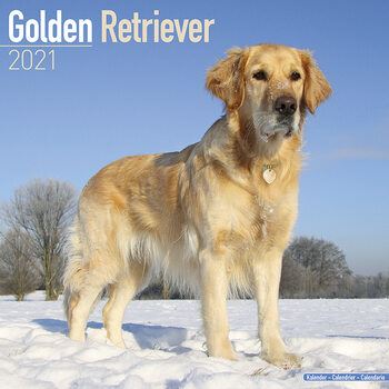 Calendar 2021 Golden Retriever