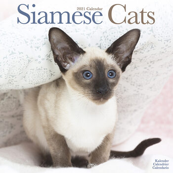 Calendar 2021 Siamese Cats