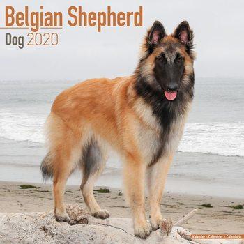 Calendar 2020  Belgian Shepherd Dog